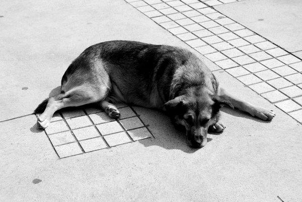 Stray Dog Chile