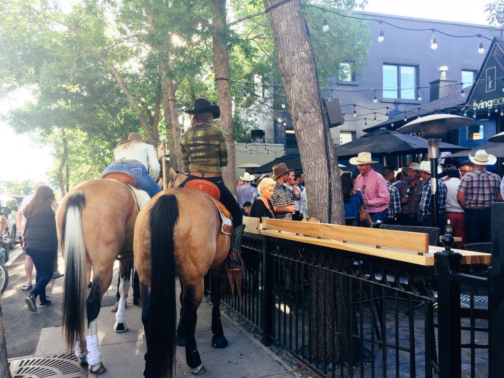 Horses in downtown Alberta